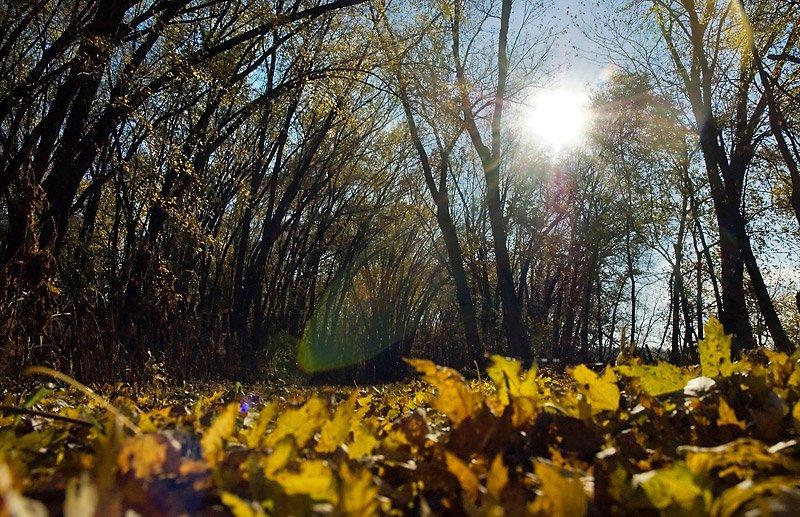 10.27.09 Fall