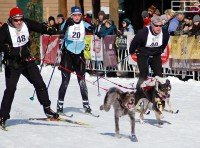 Cross-country canines take their owners for a ride during the Barkie Birkie, one of many events at the American Birkebiener in northwest Wisconsin.